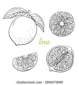 Lime lemon vector set. Hand drawn line graphic elements,black and white sketch. Illustration for menu,drinks, packege