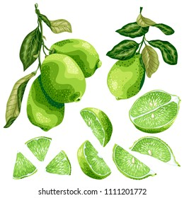 Lime parts set with lime fruit on the branch, leaves, half of a fruit and its slices in realistic graphic vector illustration in brght colors
