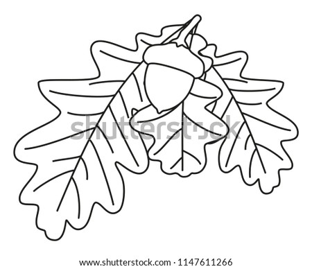 Line Art Black White Oak Branch Stock Vector Royalty Free