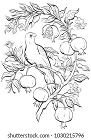 Line art parrot on pomegranate tree with flowers and fruits.Vector coloring page