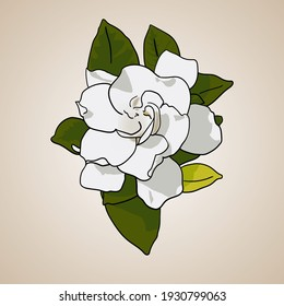 line art vector image of gardenia flower (local people often call it jempiring flower