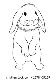 line drawing cute standing fluffy holland lop rabbit on white background vector