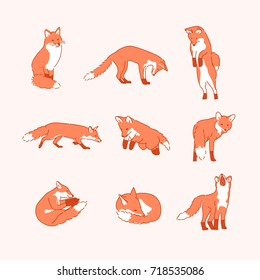 line drawing fox character vector illustration flat design