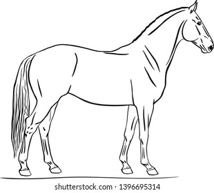 Line drawing of the horse's body