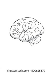 Line drawing of a human brain