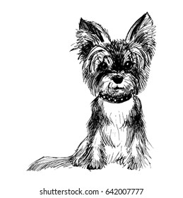 a line drawing Yorkshire Terrier
