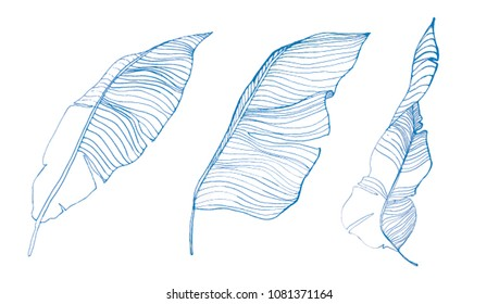 line drawn leaves illustration.