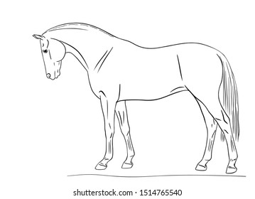 Line illustration of a sport horse standing. Side view