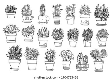 Line sketch of flowers in pots, home decor. Drawing vector black.  Cacti and succulents. Italian herbs and spices in pots.