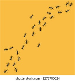 A line of worker ants marching in search of food. Vector illustration