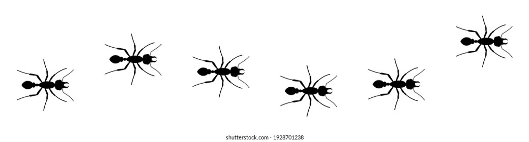 Line of worker ants marching in search. Silhouette Ants top view. Ant Logo template. Insect Symbol. Vector illustration