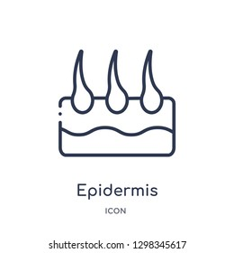 Linear epidermis icon from Medical outline collection. Thin line epidermis icon isolated on white background. epidermis trendy illustration