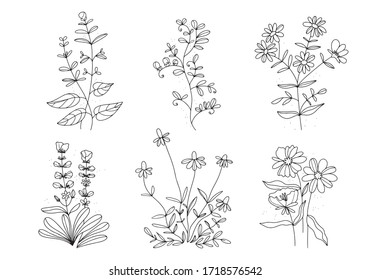 Linear flowers. Wildflowers in lines. Vintage style . White background.Art Nouveau Poster .