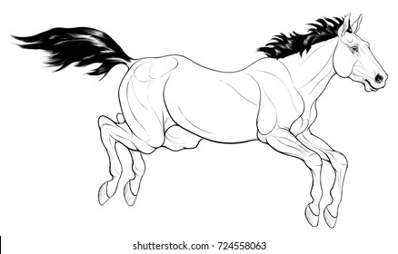 Steed Images Stock Photos Vectors