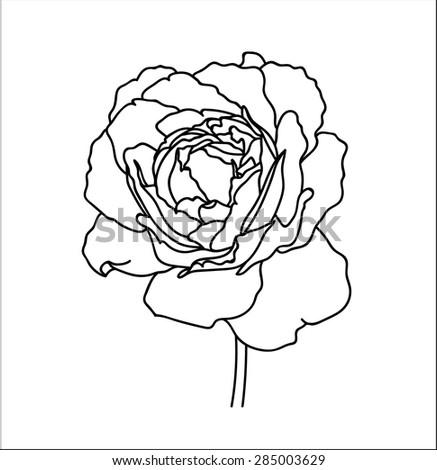 Linear Rose Black White Botanical Illustration Stock Vector Royalty