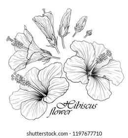 Linear vector illustration of a beautiful hibiscus flowers isolated in set