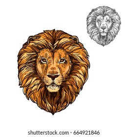 Lion African wild animal head or muzzle sketch. Vector isolated icon of panther leo species cat for zoology, mascot blazon of sport team, wildlife savanna nature adventure scout club or tattoo