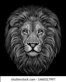 Lion. Black and white, realistic, graphic portrait of a lion's head on a black background.