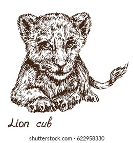 Lion Cub Drawing Images Stock Photos Vectors Shutterstock Audubon zoo's two lion cubs explore outside in their habitat. https www shutterstock com image vector lion cub lying hand drawn doodle 622958330