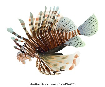 Lion fish isolated