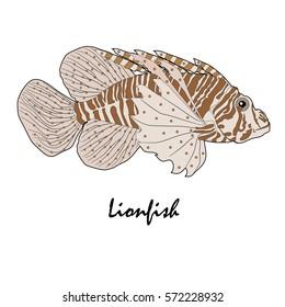 Lion fish Saltwater Aquarium Fish vector illustration