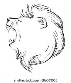 Lion head drawing sketch