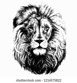 Lion head isolated white background vector