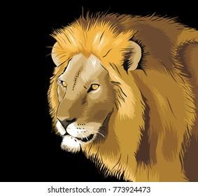Lion illustration creative vector drawing