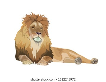 Lion Lying Down Stock Illustrations Images Vectors Shutterstock An exhausted lion laying down vector cartoon clipart. https www shutterstock com image vector lion lying down image vector illustration 1512245972