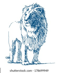 Lion sketch drawing on white background