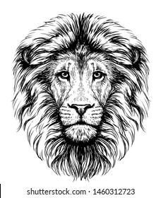 Lion. Sketchy, graphical, black and white  portrait of a lion's head on a white background.