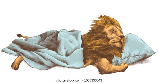 lion sleeping under a blanket, hugging a pillow paws, sketch vector graphics color picture