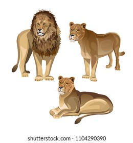 Lion with two lionesses. Vector illustration isolated on the white background