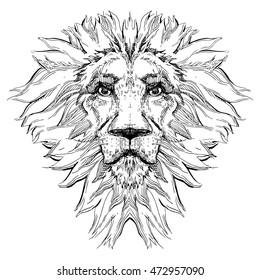 Lion vector illustration. Hand drawn vector sketch.