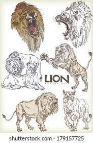 lion vector sett