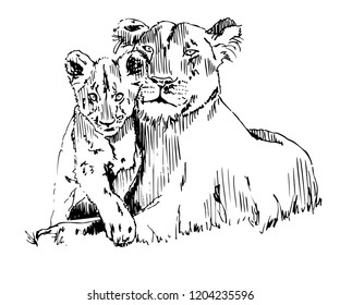 Lioness With Cub Vector Sketch Illustration