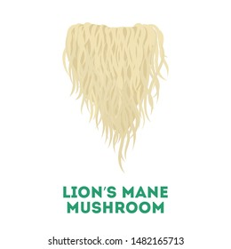 Lion's mane mushroom. Healthy natural fungus. Botany concept. Isolated vector illustration in flat style