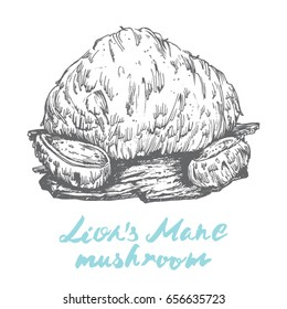lion's mane popular healing mushroom