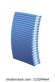 Lipid bi-layer