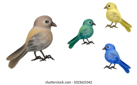 Little bird-Sparrow, Canary, blue bird, green bird, exotic bird, realistic isolated vector illustration.