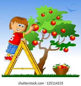 little boy collects red apples (vector illustration)