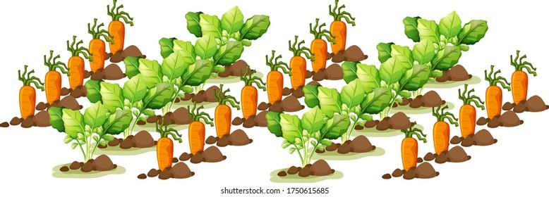 Little carrots in field farm isolated in cartoon style  illustration