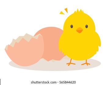 Little chick and egg shell on white background : Vector Illustration