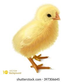Little chicken. Vector eps10.