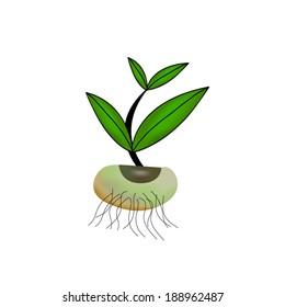 Little plant seedling. Vector illustration