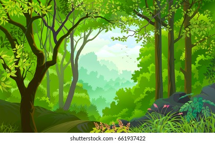 A live beautiful green jungle with lots of trees, flowers and plants
