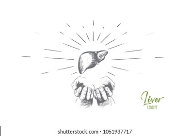 Liver concept. Hand drawn human liver anatomy in hands. Part of human body, liver organ isolated vector illustration.