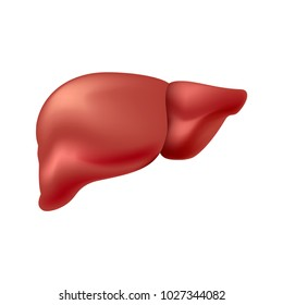 liver healthy isolated on white background
