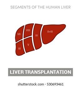 Liver transplantation concept: dividing into segments