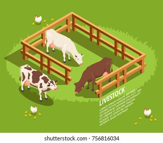 Livestock including cows in paddock, hens with chicks on pasture isometric composition on green background vector illustration